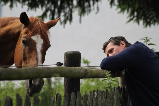 How do Horses Communicate with Humans