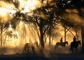 horses early in the morning