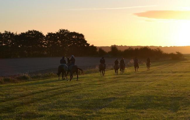 horses train early in the morning