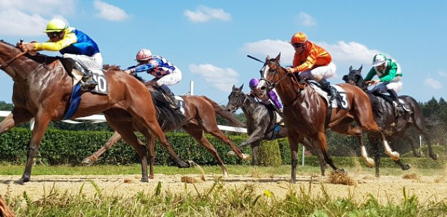Can Stallions be racehorses?